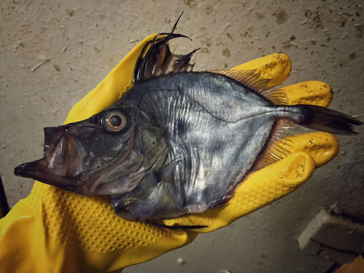 федорцов рыбак