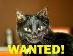 wanted-cat