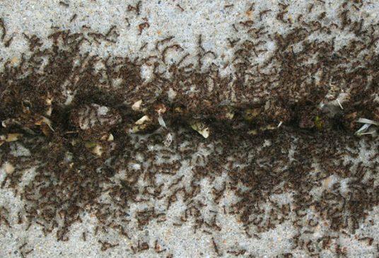 ant-cinnamon-fi-696x365