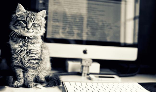 7876760-office-cat-650-a542d8629a-1484578572