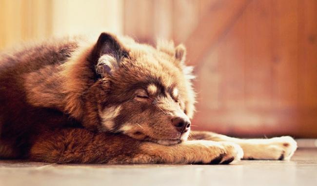 7876860-sleepingdog-650-a542d8629a-1484578572