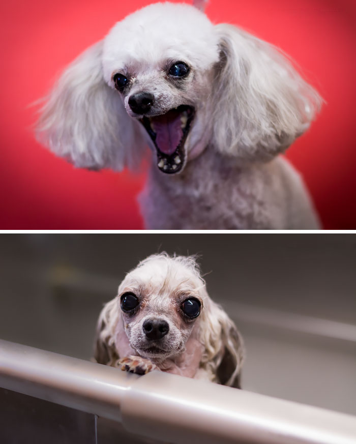 wet-dogs-before-after-bath-102-57a87ea89170d__700